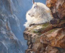 Sunday Morning on the Cliffs, painting by Stefan Baumann of a Rocky Mountain Goat lying down on a sheer cliff