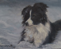Miss Shasta in the Snow, painting of a black and white border collie lying in snow by Stefan Baumann