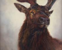 Grand Buck of the Siskiyou, painting of a large buck deer by Stefan Baumann