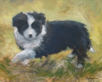 Lady Shasta, painting of a black and white border collie puppy by Stefan Baumann