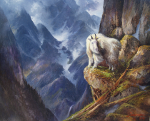 This painting titled Cliff Dweller is an oil painting by Stefan Baumann of a mountain Dall Sheep in Glacier National Park perched on the edge of a high cliff.