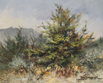 This is a painting of a Juniper Tree in Lava Beds National Park painted by Stefan Baumann in nature.