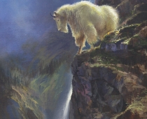 This painting by Stefan Baumann called Moonlit Watch features a mountain Dall Sheep on a ledge in the moonlight in Glacier National Park.