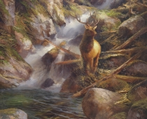 This painting called Wapiti Sanctuary by Stefan Baumann features an Elk called a Wapiti in the pool of a waterfall