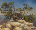 Grand Canyon: North Rim at Noon