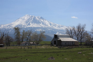 Painting Plein Air: View of Hoy Barn and Mt. Shasta in Spring.