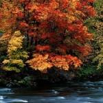autumn41